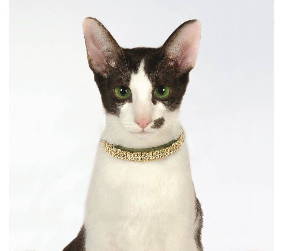 What Cat Doesn T Love Bling Like Us Humans Do Our Princess Catcollar Has Lots Of It Available Now Htt Dog Clothes Boutique Cat Collars Teacup Dog Clothes