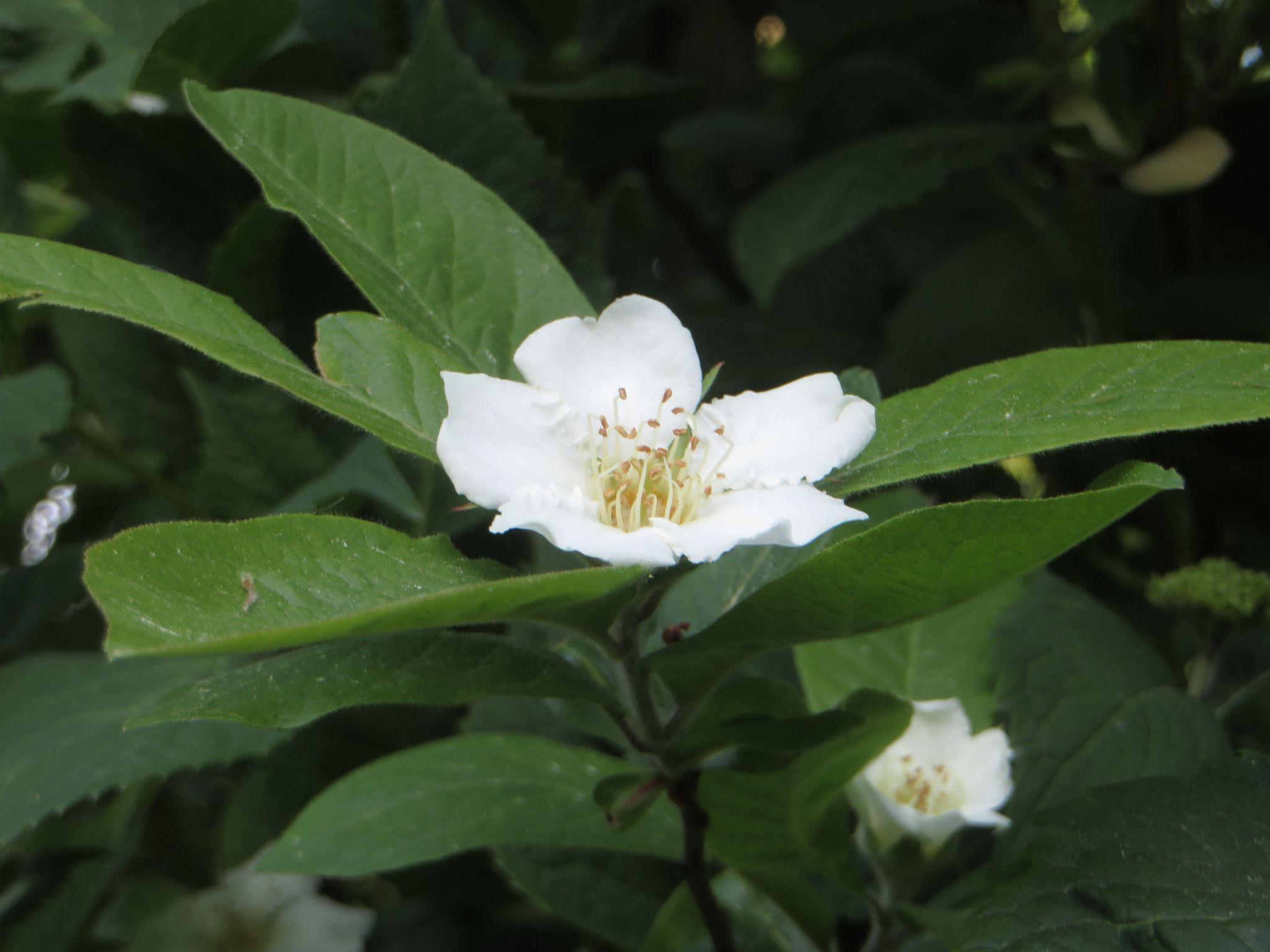 9acabc1f7366dab8933cb113079eda43 Luxe De Fleurs De Jardin Des Idées