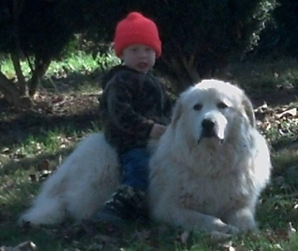 Lostdog 1 4 14 Wingina Va Mayo Creek Cabell Rd Greatpyrenees