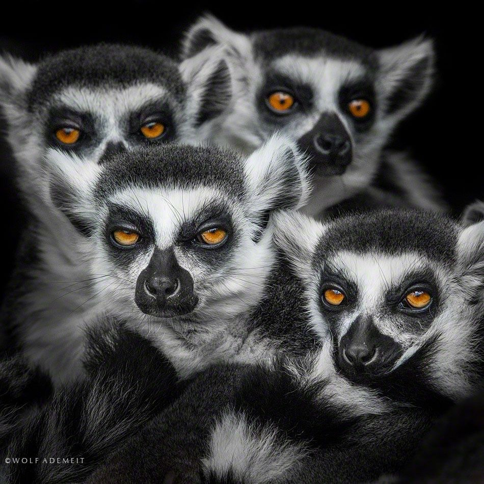 don't feed them after midnight by Wolf Ademeit on 500px