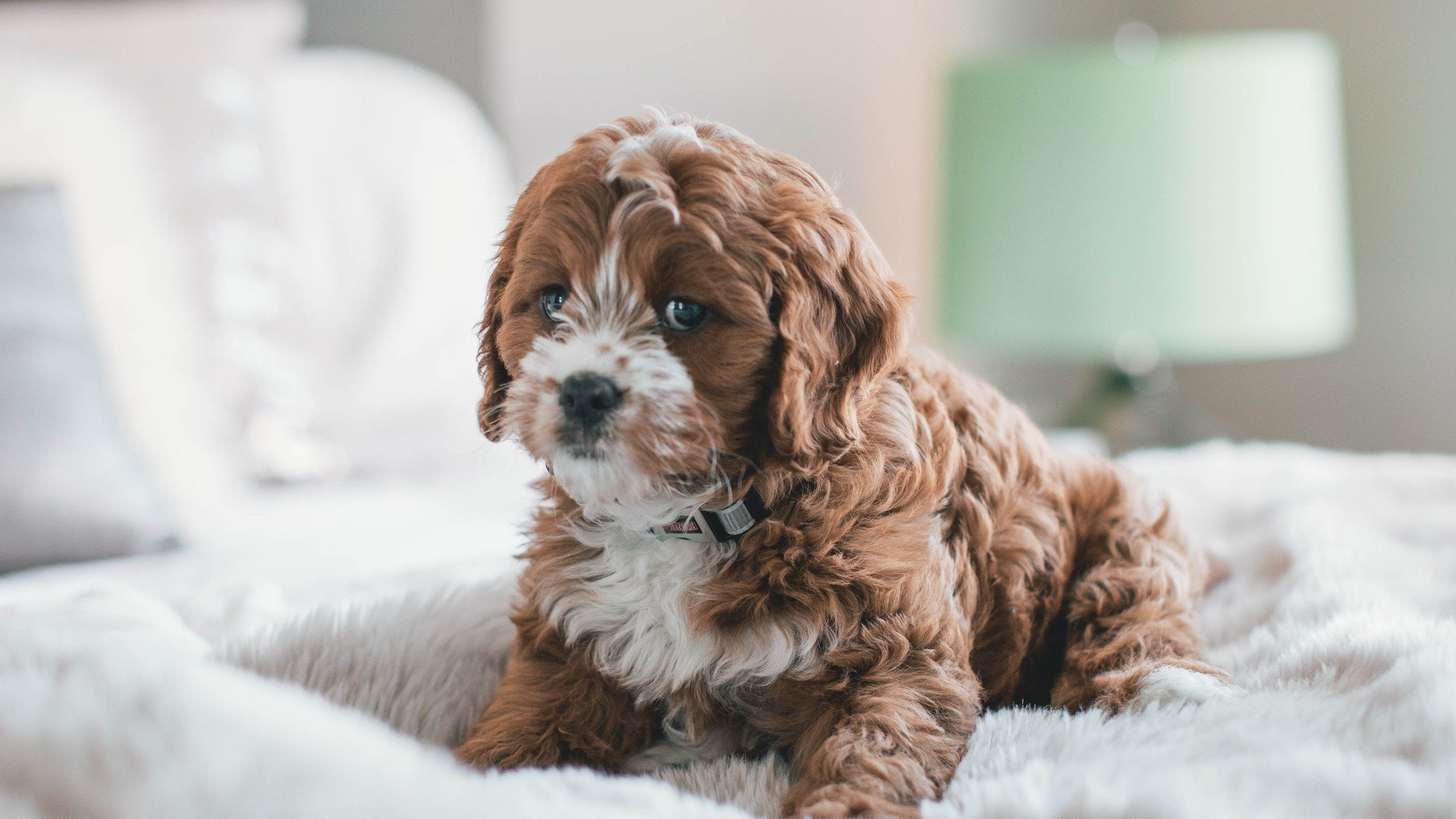 The Art Of Having A Pet And A Clean House At The Same Time Your Dog Pets Puppies