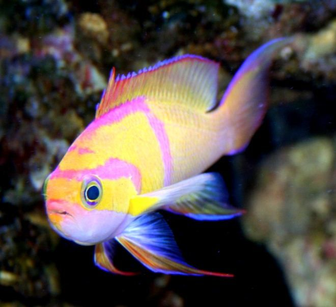 Aquarium Depot Marine Fish Pretty Fish Saltwater Fish Tanks