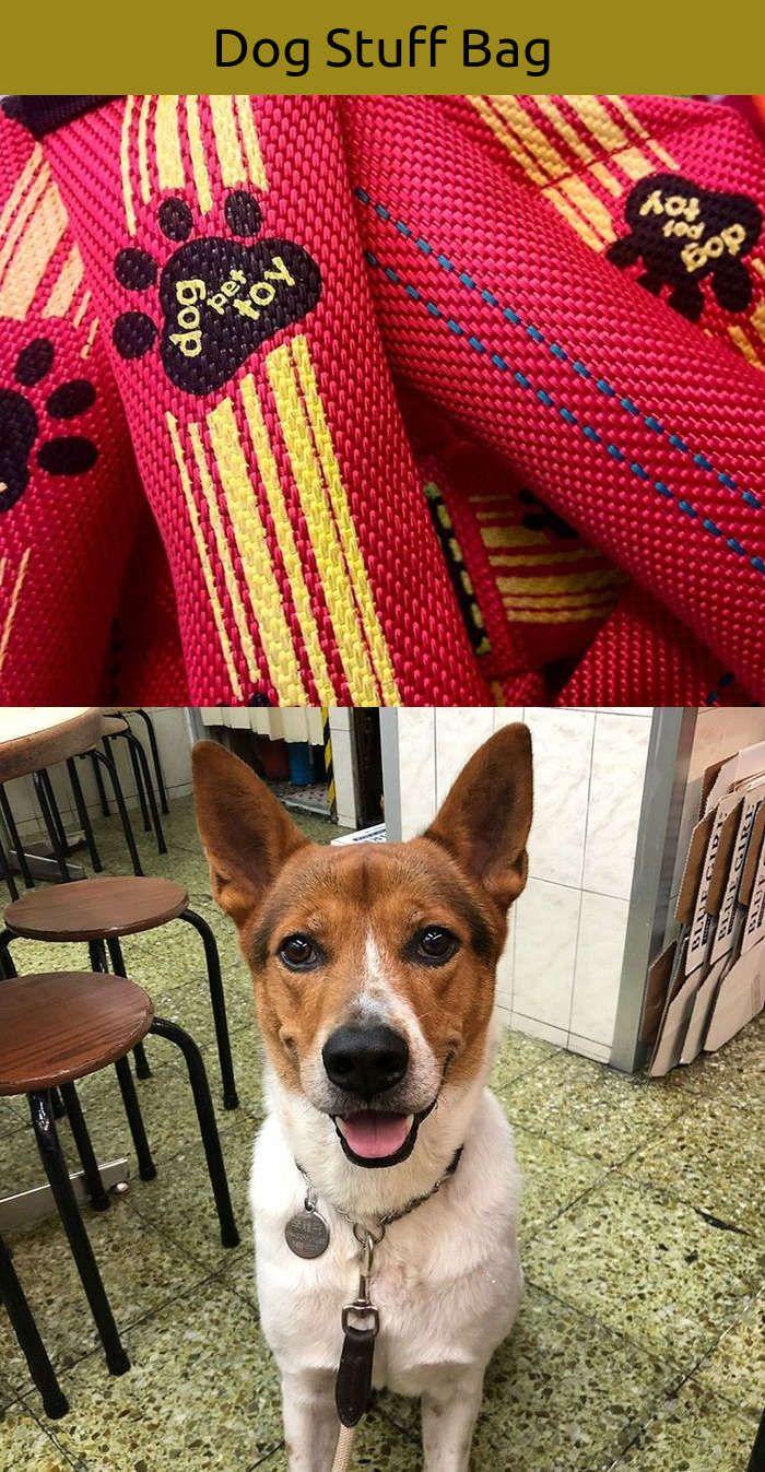 Funny dog agility toys dog french bulldogs pinterest dog