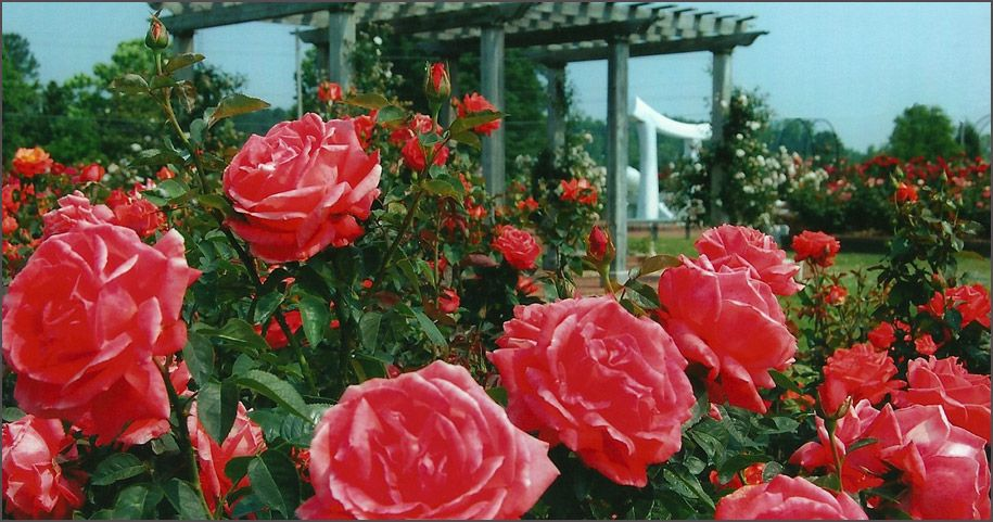 nothing found for most beautiful rose gardens in the world - Most Beautiful Rose Gardens In The World