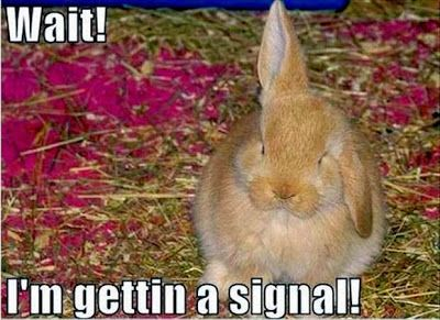 Rabbit Ramblings Funny Bunny Memes Animals Funny Rabbit Funny