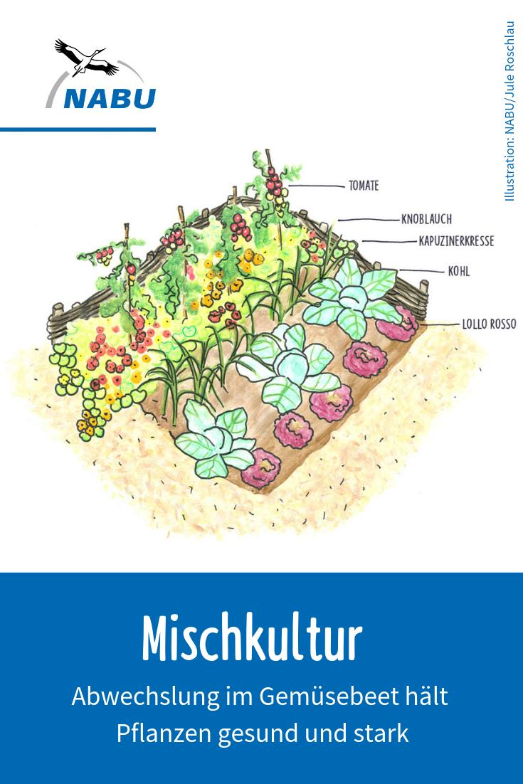 Gartentipps Mischkultur und Fruchtfolge   NABU   Mischkultur ...