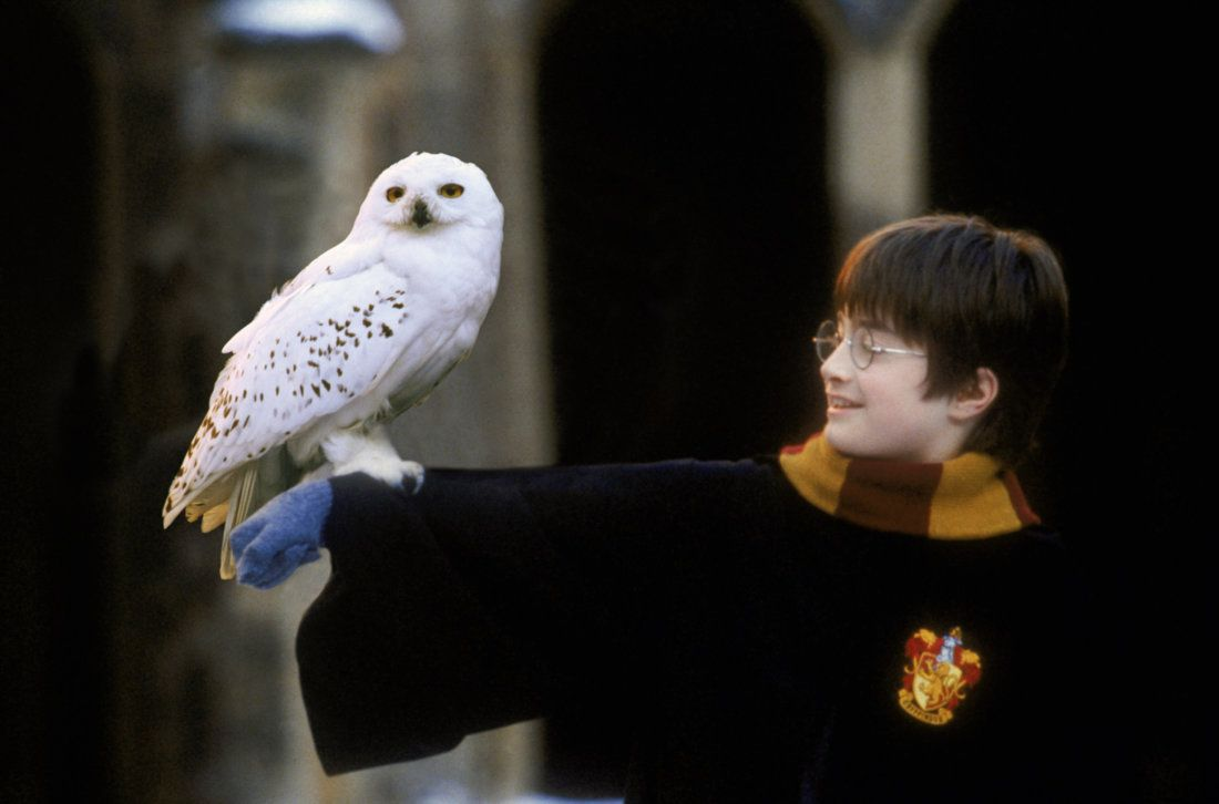 Harry Holding Hedwig Harry Potter Collection Harry Potter Owl Harry Potter Books