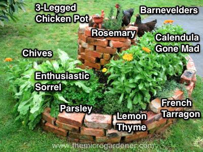 9aceb07b54f498c67c4977b0b39c37d2 - What Type Plants Are Suitable For Micro Gardening