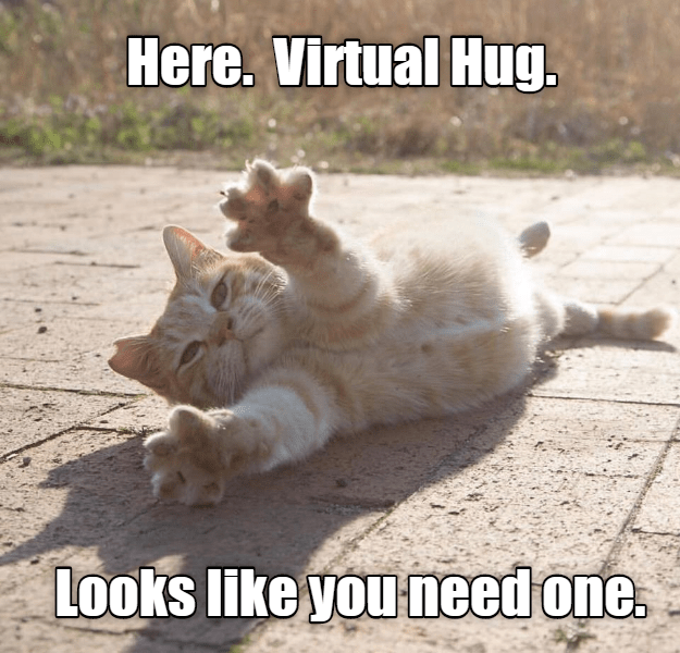 Virtual hug. You need one | Silly cats, Cheezburger cat ...