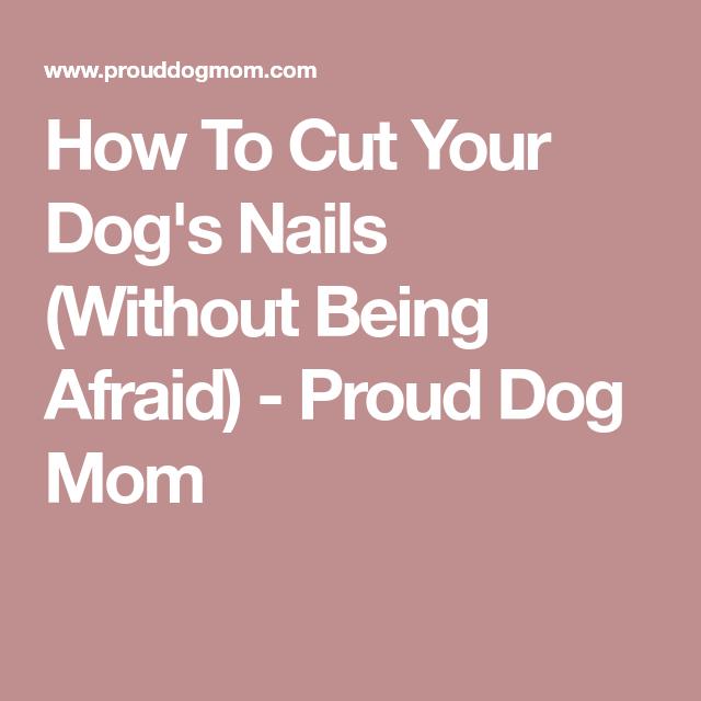 Pin On Dog Nails