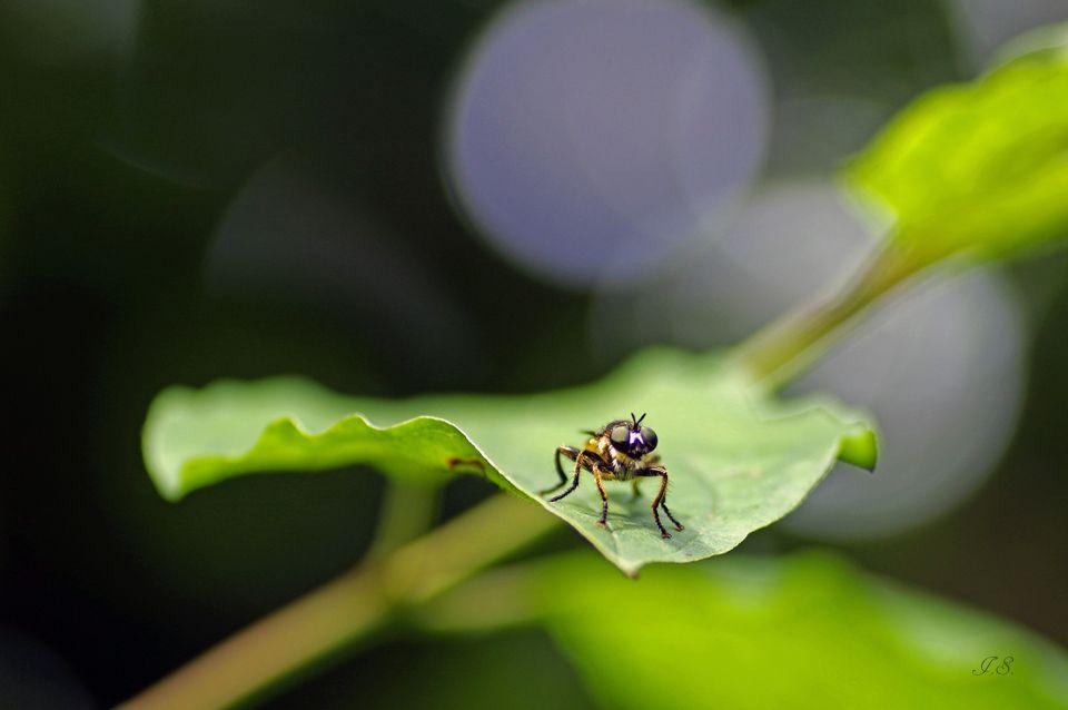 Wer lauter große Dinge sehen will, muß sich zu einer Mücke wünschen. Johann Jakob Wilhelm Heinse