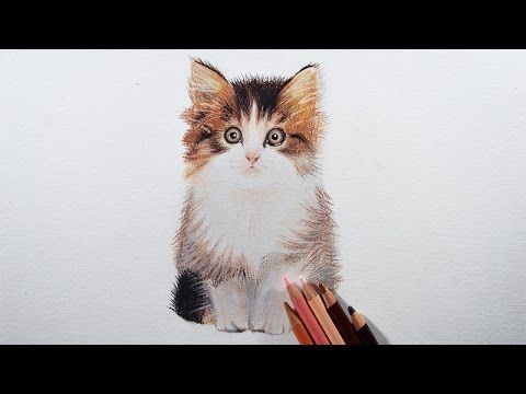 How To Draw A Kitten Easily With Colored Pencils Youtube