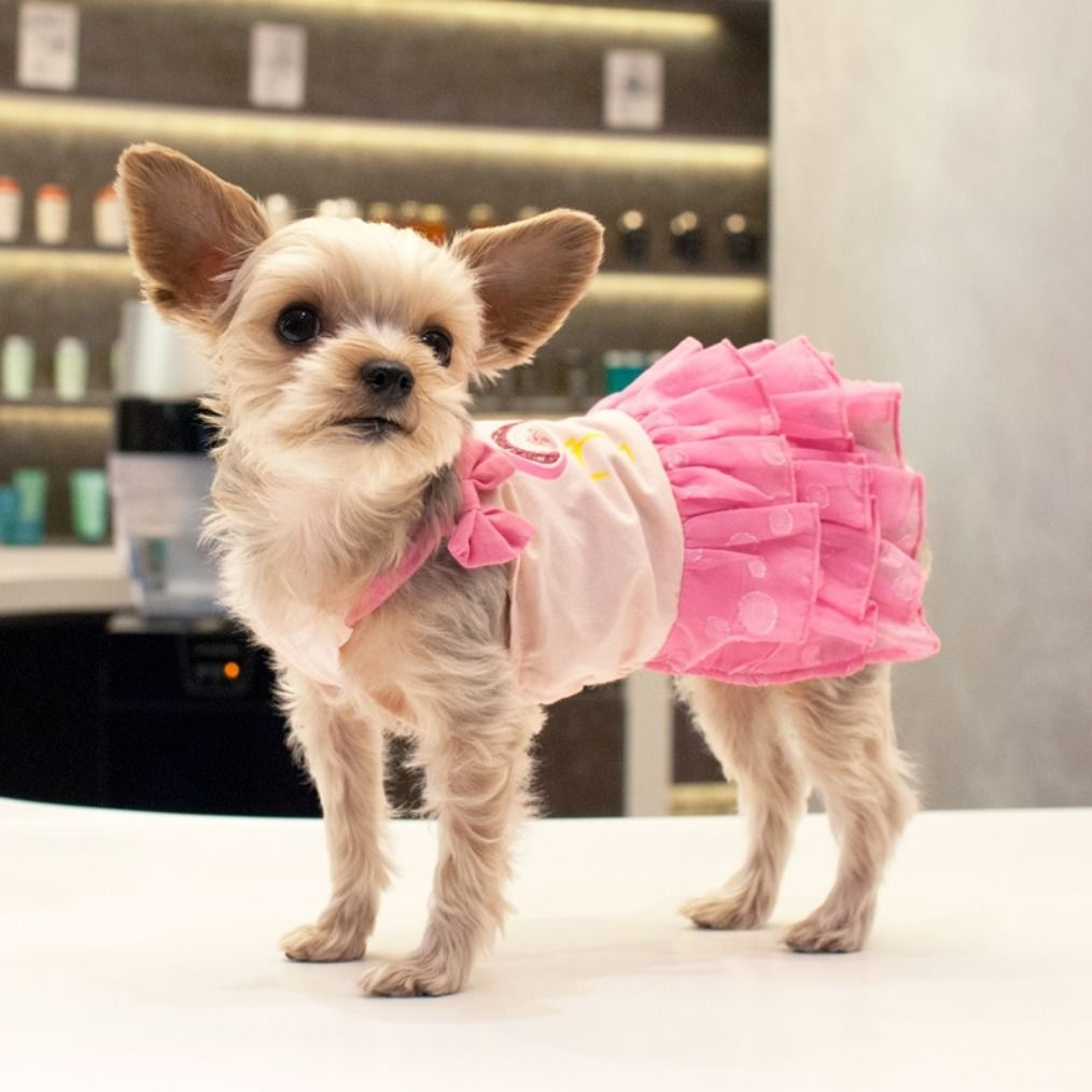 Ruff Houzin Is Your One Stop Online Shop For Today S Most Functional Trendy And Adorable Dog Apparel And Accessories Our Affordable Collections Ar Dog Clothes