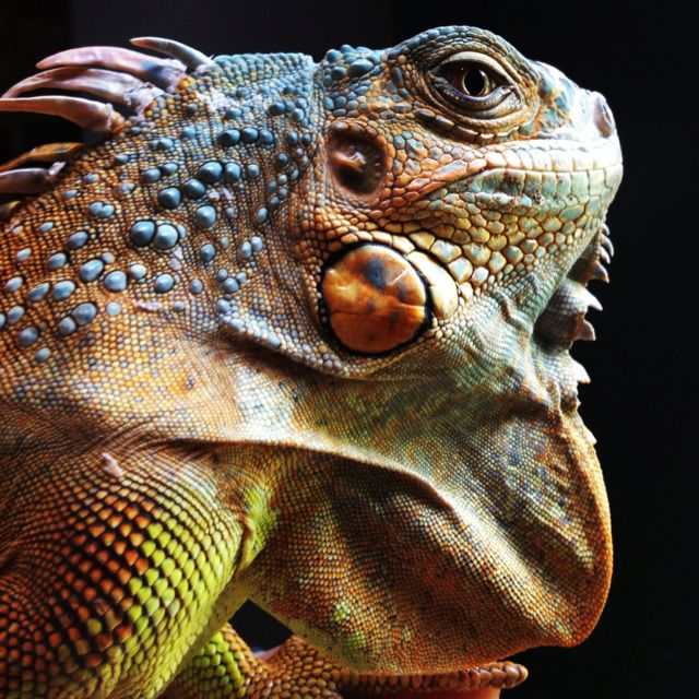 Lizard Once You Know That The True Decision Maker Is The Reptilian Brain Your Entire Sales And Marketing Strategy Should Apply Completely Different C 動物 両生類 鱗