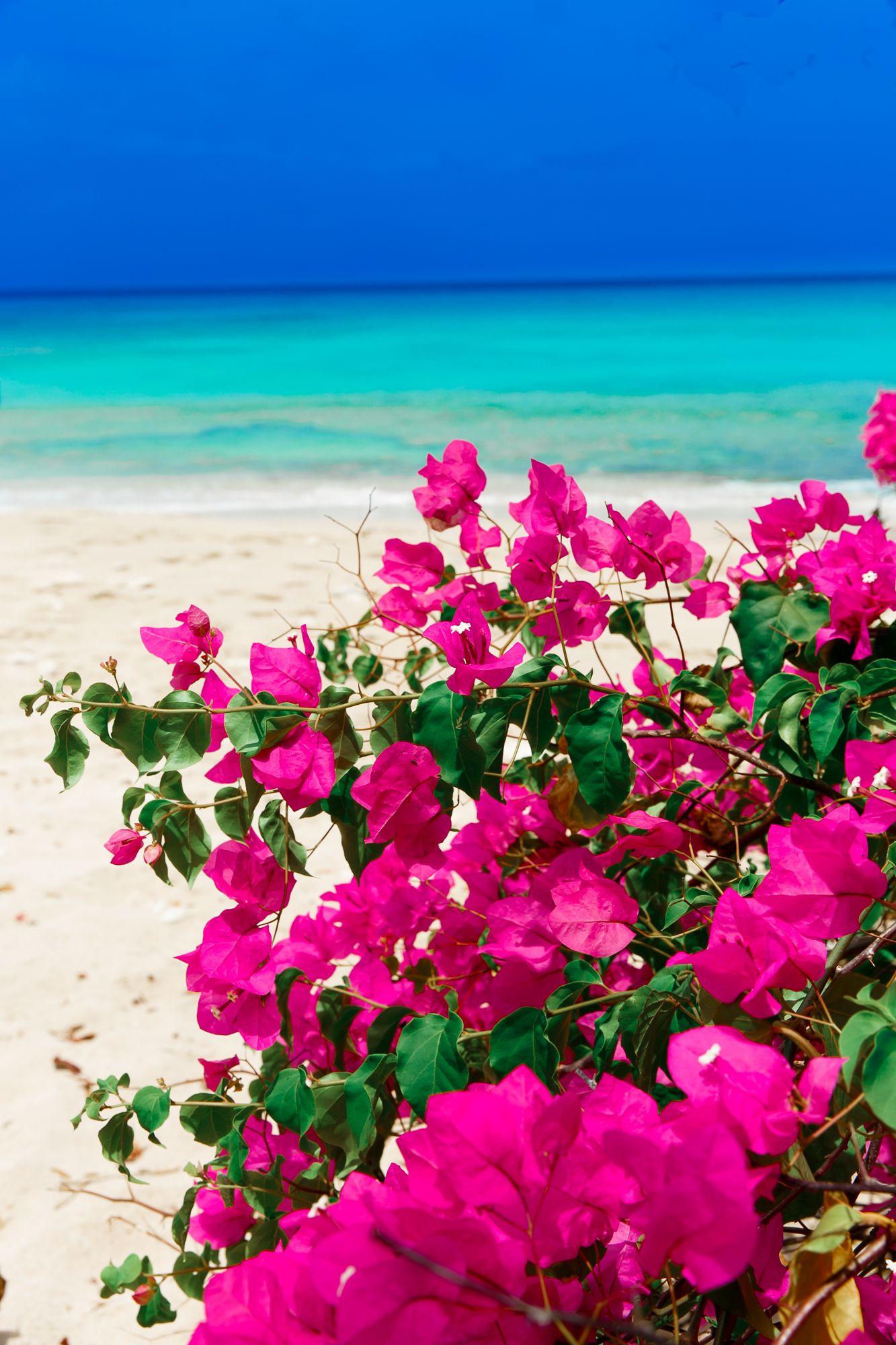 Beautiful Flower Wallpaper For Girls Desktop Wallpaper Rose Flower Wallpaper Blue Flower Wallpaper Wallpaper Nature Flowers