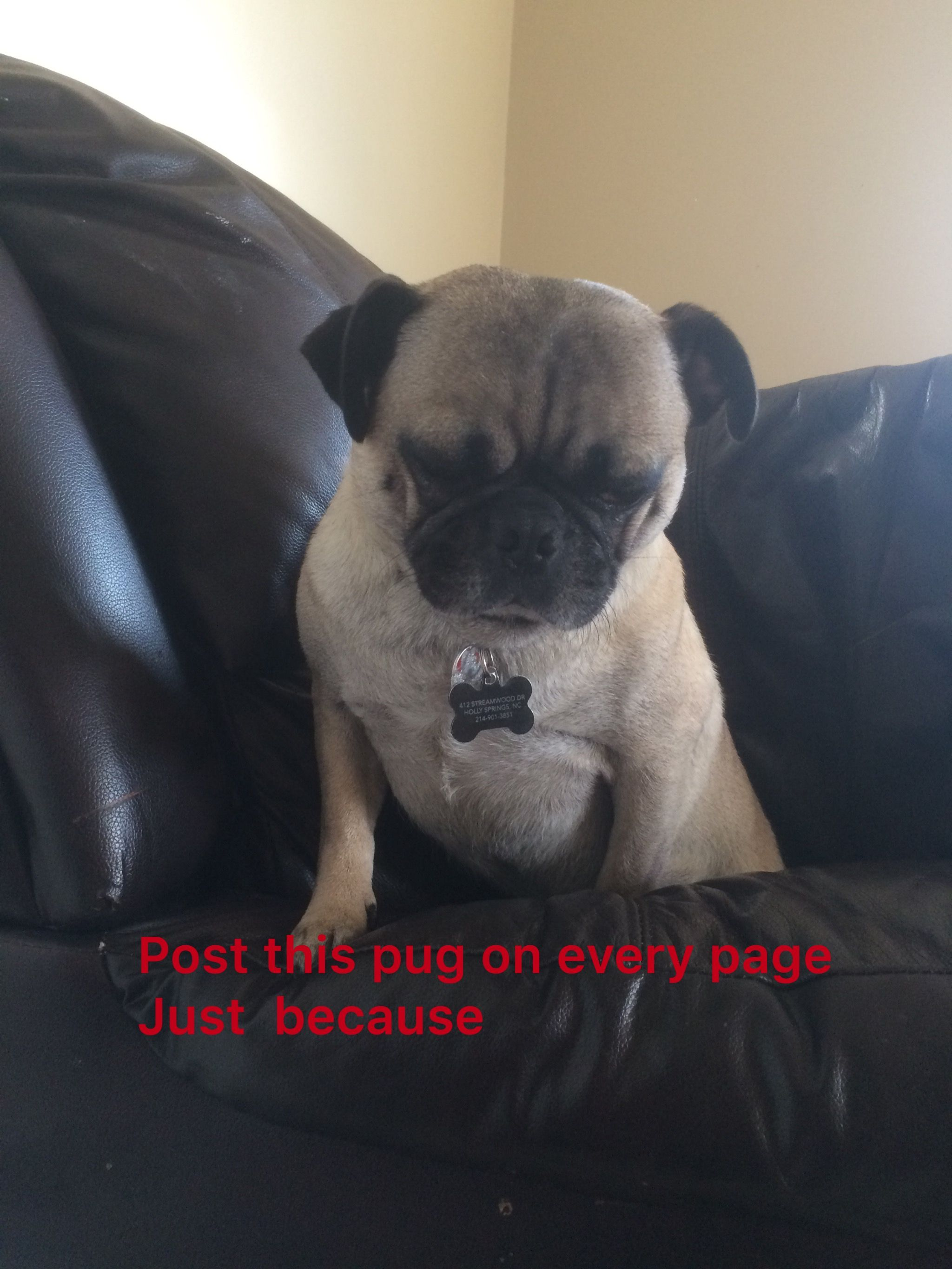 Pin by avery gifford on pugs pugs pug pictures pug life