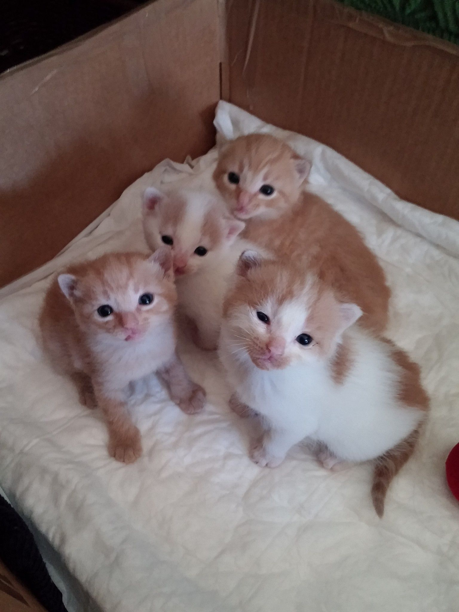 Cucciolo A Little Mini Kitten Cats Cats Kittens Cats Kittens