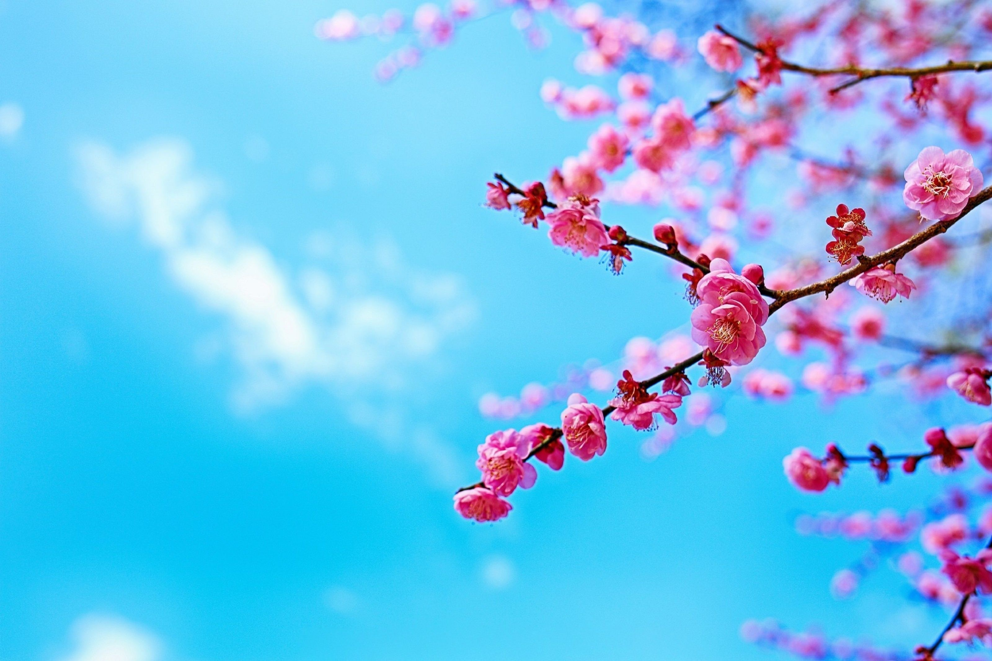 Картинки по запросу обои на рабочий стол весна | Картинки ...