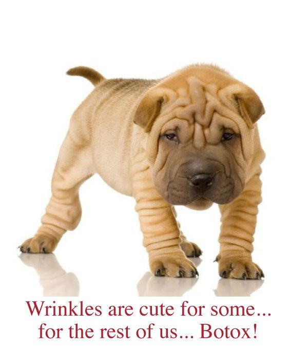 Botox Done Naturally For Wrinkle Prevention Shar Pei Puppies
