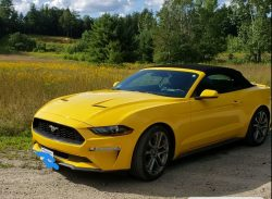 Fun Fast Car Love It But Buying A House Must Go For Sale On Usedmustangsforsale Com Used Mustangs For Sale Ford Mustang For Sale Car