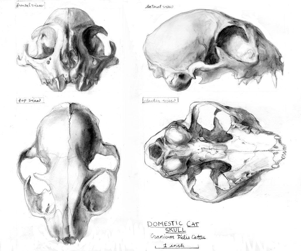 Janet Bruesselbach | Comparative anatomy | Pinterest | Anatomy ...