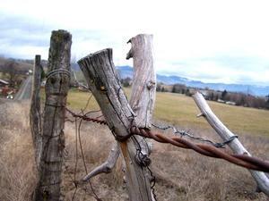 Old wires and fenceposts    by Camra_ Art / Ellen Gardner