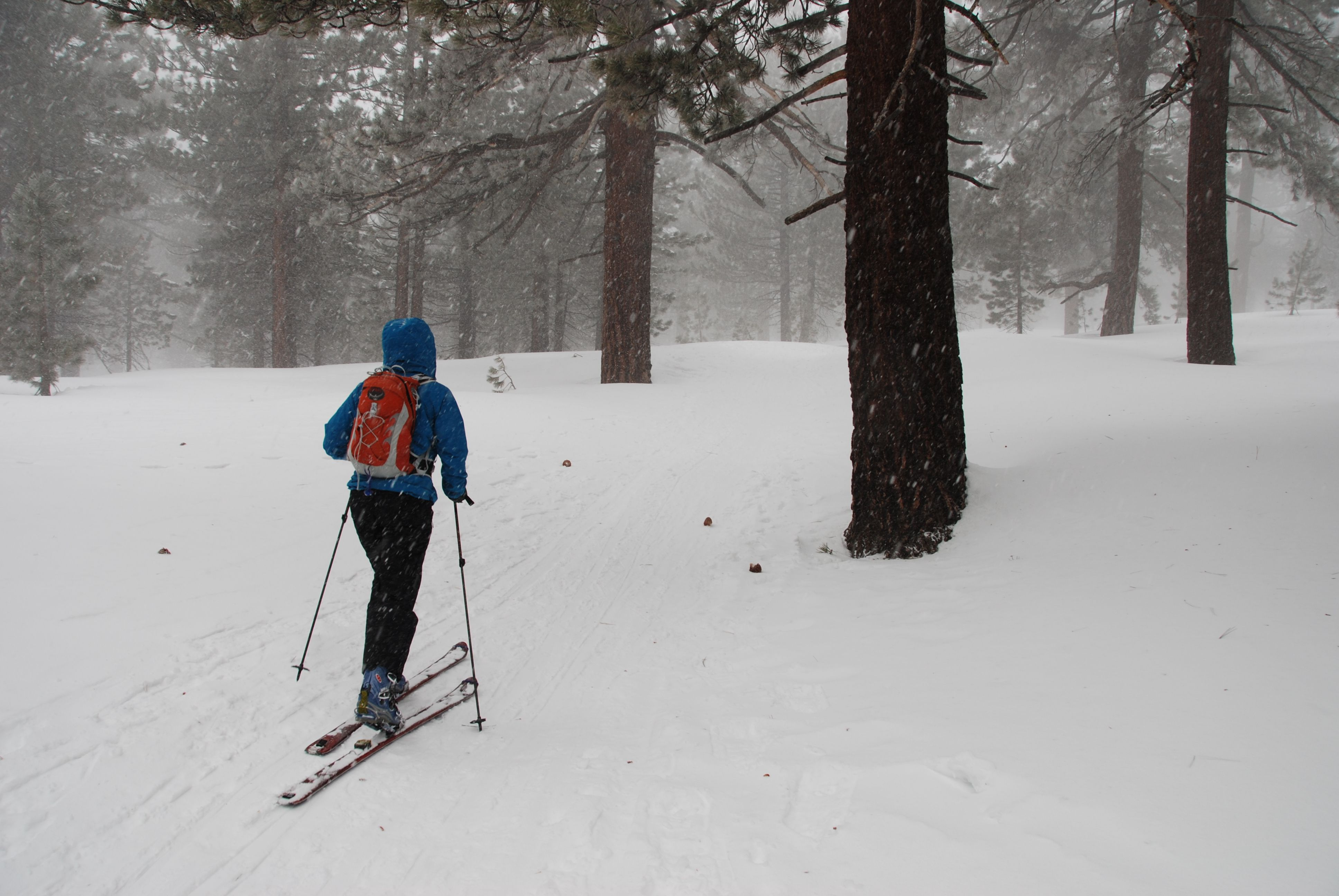 Mt Pinos Cross Country Skiing Snowshoeing Snow Play Frazier Park Cross Country Skiing Skiing