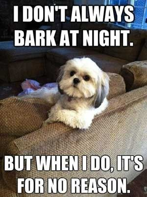 Happy Friday Jokes Happy Friday Funny Dog People Look At That