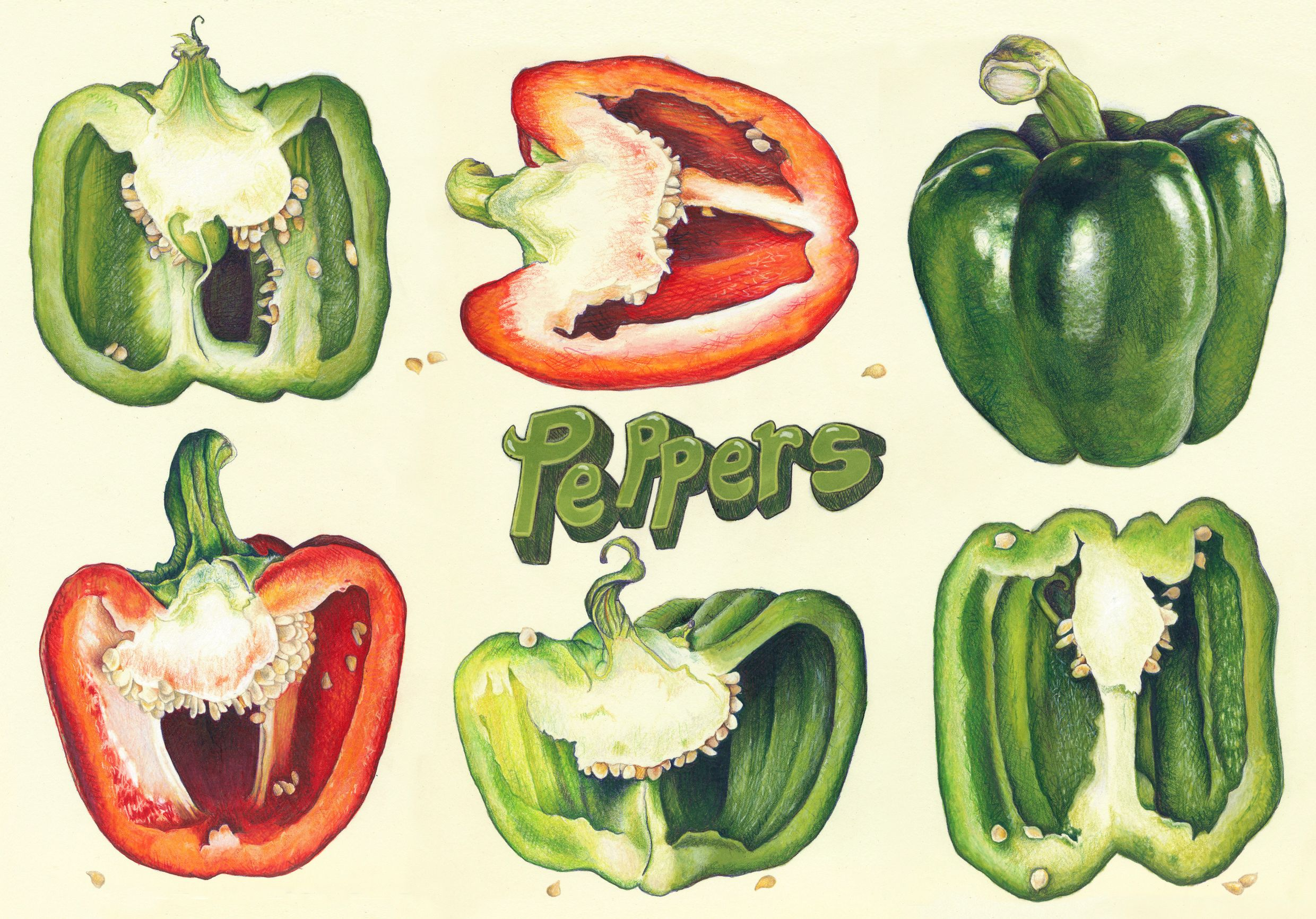 Christina Mclean Bell Pepper Drawings Art Project
