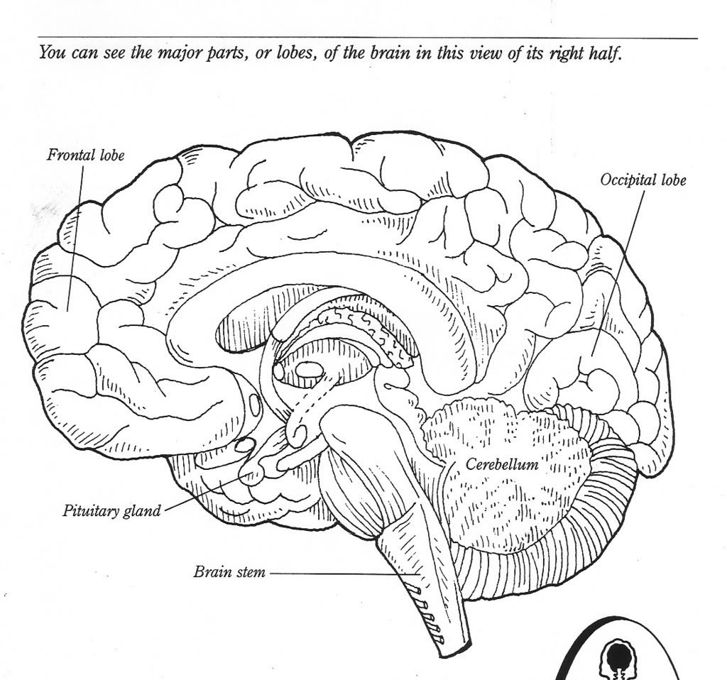Good Brain Coloring Page In Download Coloring Pages With