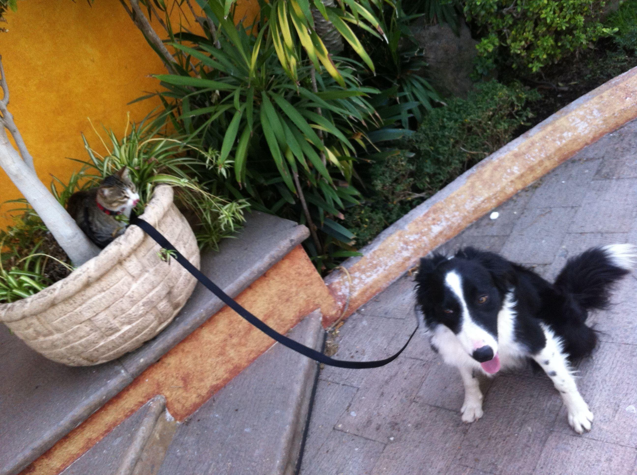 En casa manda el gato
