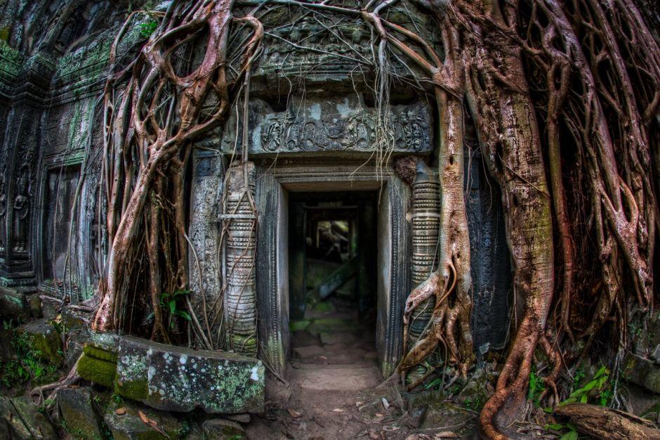 #TaProhmSiemReapCamboya #BrianMatiash... /// El poder implacable de la naturaleza sobre las estructuras hechas por el hombre