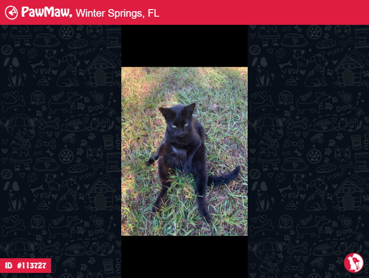 CHESTER A MALE CAT LOST IN WINTER SPRINGS, FL, 32708 in