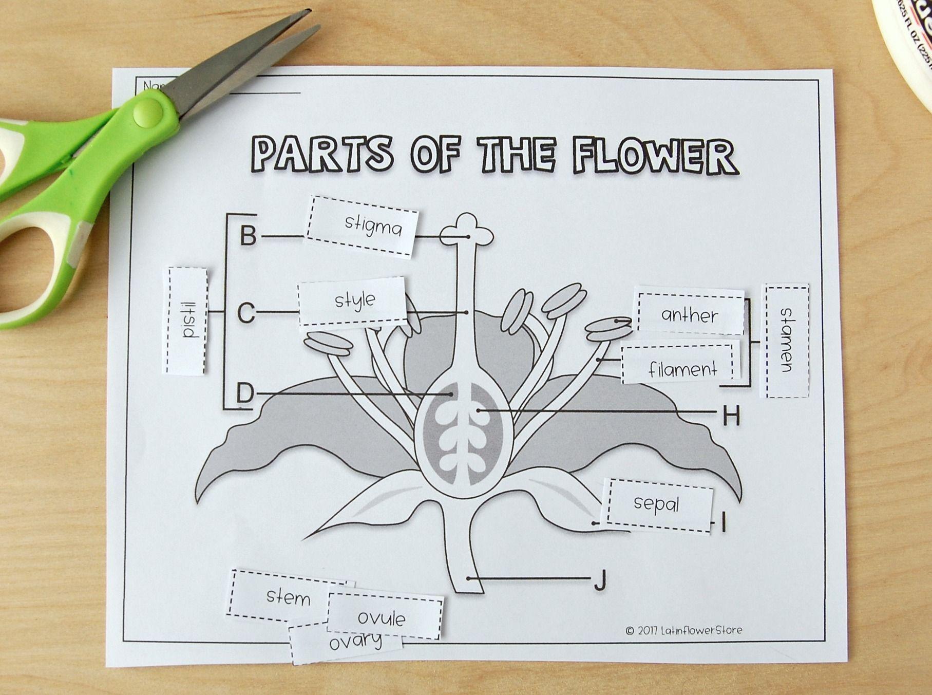 Pin On Animal And Plants