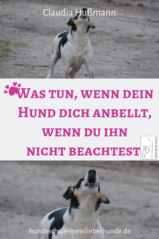 Mein Lieber Hund Podcast Episode 32 Hilfe Mein Hund Bellt Mit Bildern Hund Bellt