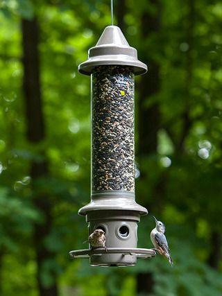 Wbu Eliminator Squirrel Proof Bird Feeder Picture Arte Em Madeira