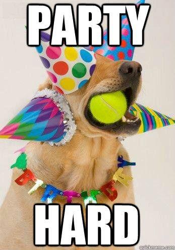 9ad605b14e877dd9a2210b41b7ace52a birthday dog meme image jpg (347×493) funnys pinterest,Birthday Meme Animal