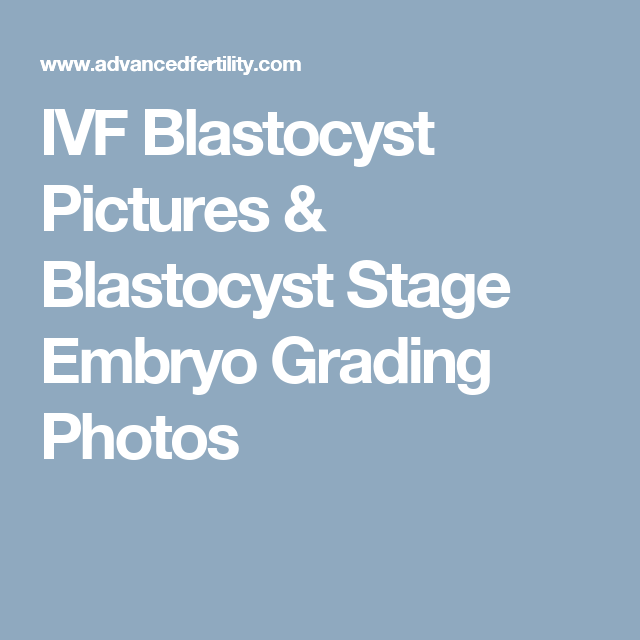 IVF Blastocyst Pictures & Blastocyst Stage Embryo Grading