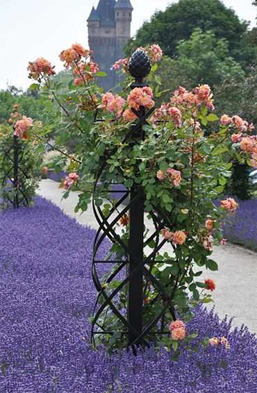 garden obelisks garden trellis climbing rose flowers gardens containers perennials. Black Bedroom Furniture Sets. Home Design Ideas