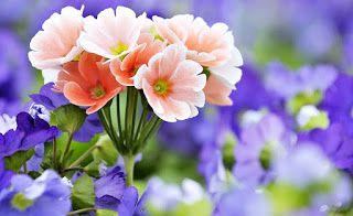 Gambaran Bunga Gambarbunga Foto2 Bunga Cara Menggambar Bunga