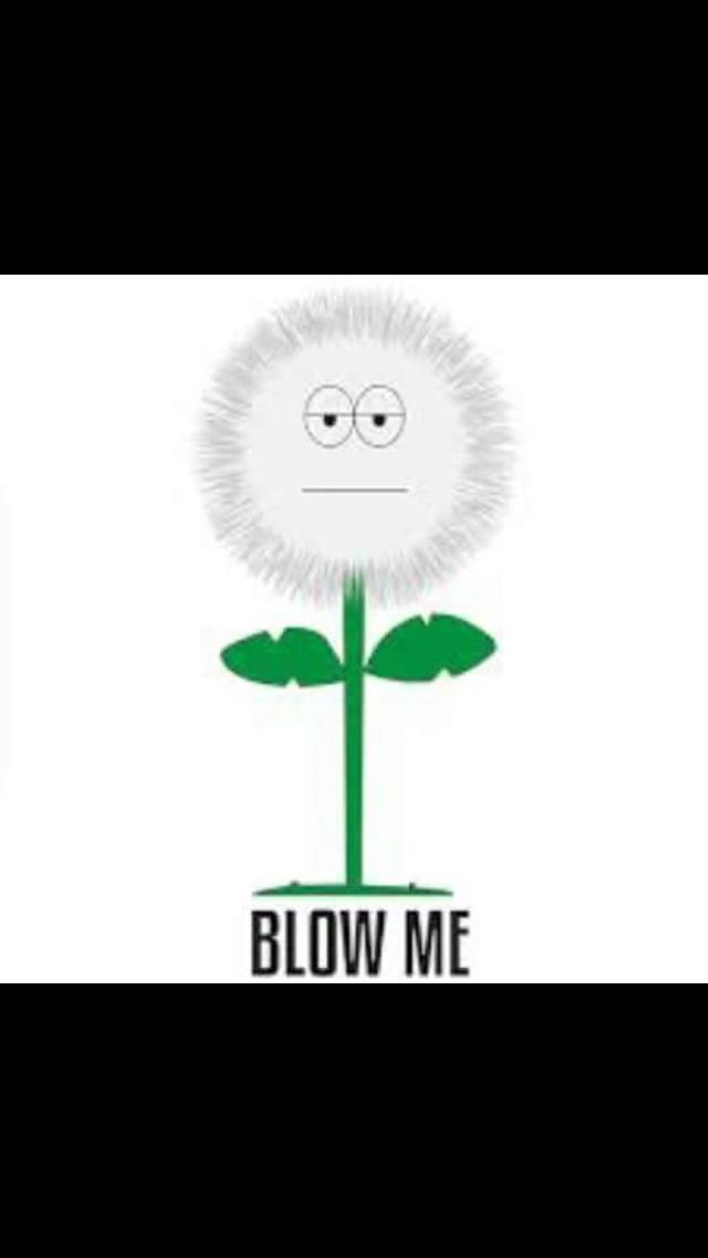 Dandelion Blow Me Meme