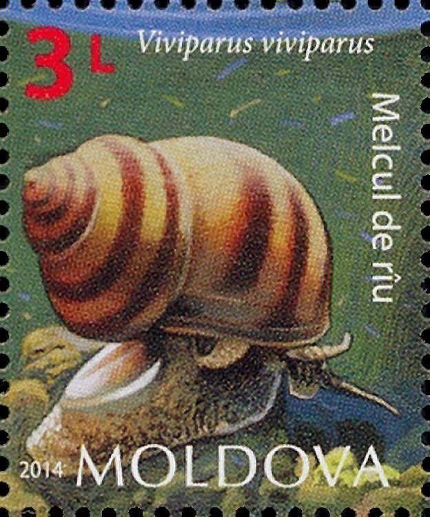 Moldova Postage Stamps (Commemorative) 2014 № 887   River Snail (Viviparus viviparus)   Issue: Fauna of Moldova