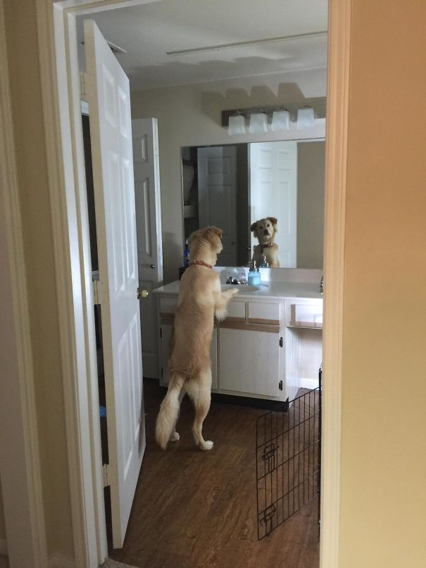 50 Hilarious Pics Of Dogs Acting Weird