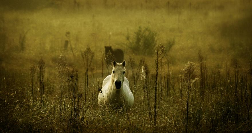 الحمل والولادة في الخيول متابعة وترقب الجزء الأول Arabian Horse Horses Equines