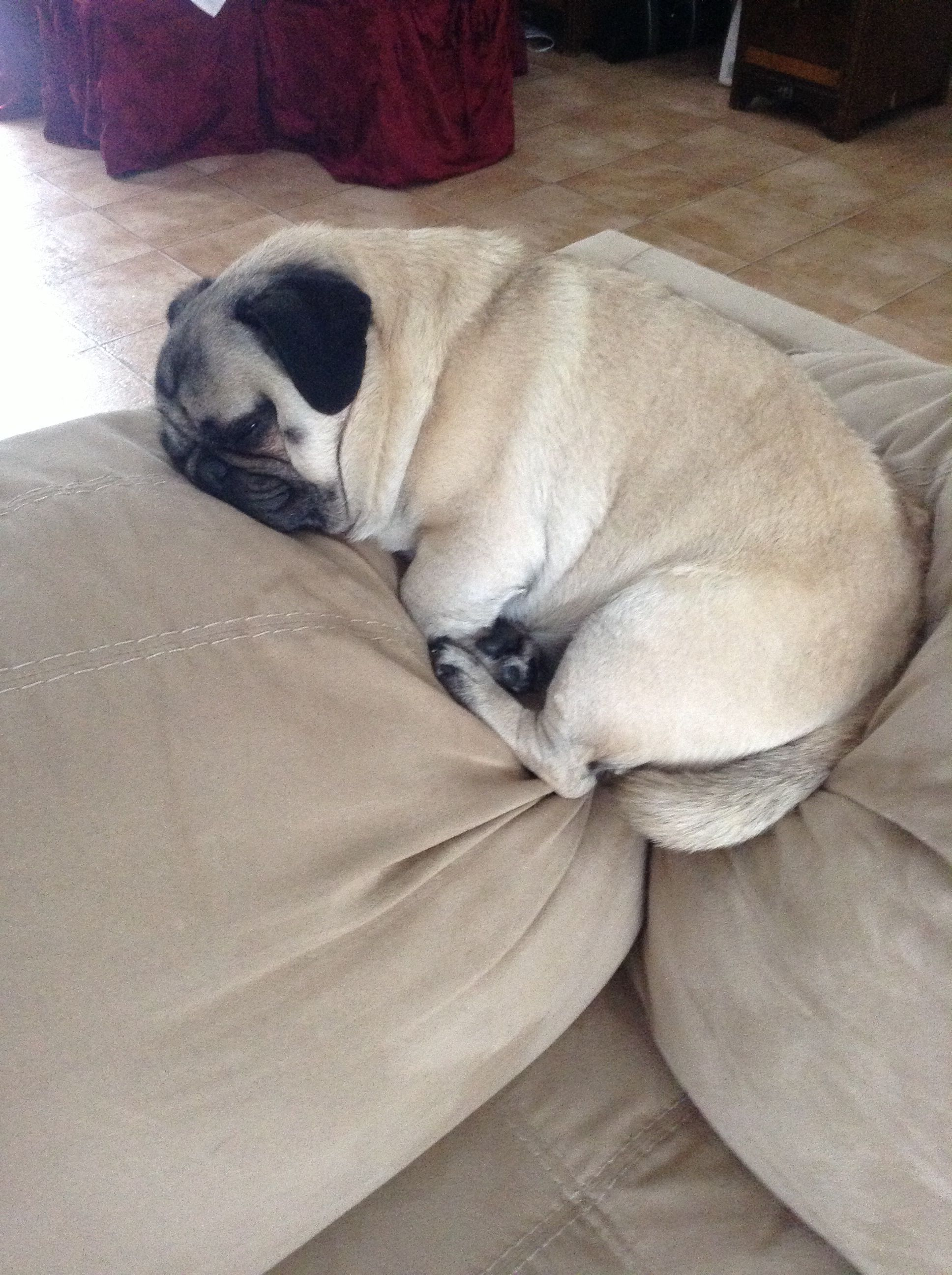 My Pug Does This Every Time We Aren T Home And Gets In Trouble