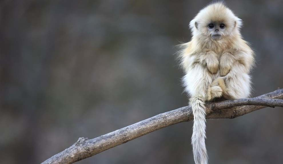 The cutest monkey ever to walk the Earth. | Community Post: The 50 Cutest Things That Ever Happened