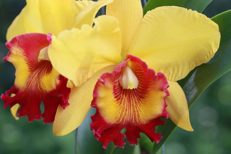 The Diffe Types Of Orchids Garden Club