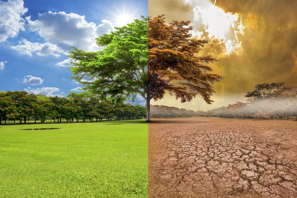 How Does Global Warming Affect Us The Impact Of The Earth S Increasing Surface Temperature Is Meaningfu Global Warming Climate Change Global Warming Project