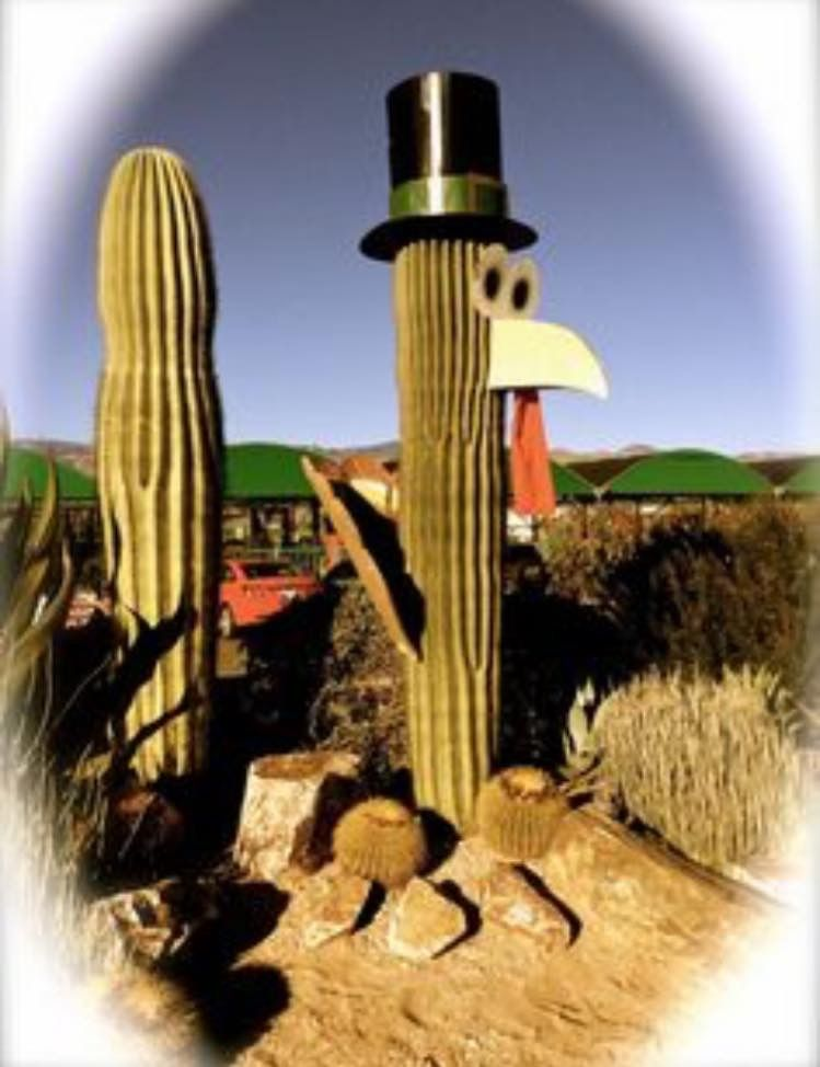 Pin by Debbie Lynn on Arizona Landscaping images