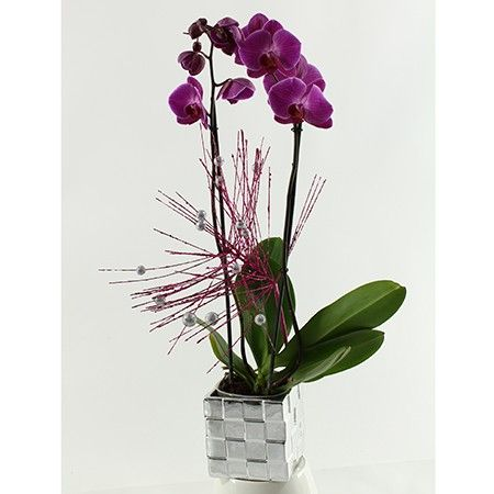 orchidee 5 branches